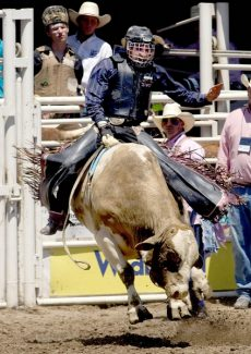Tarren Calhoun rides his bull Aug. 1 during the 2009 Little Britches Finals Aug.1 at the State Fairgrounds in Pueblo. Calhoun emerged as the winner of the senior bull riding event with a score of 83 points. Photo by Dawn Madura