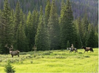 One of the riders encounters a bull elk in Rocky Mountain National Park on a similar 2,000 mile journey in 2010. Courtesey photo by Ben Masters.