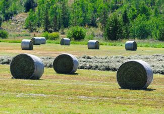 Rolls of hay sit in the field of a ranch along U.S. 34 north of Granby on Tuesday, Aug. 20.
