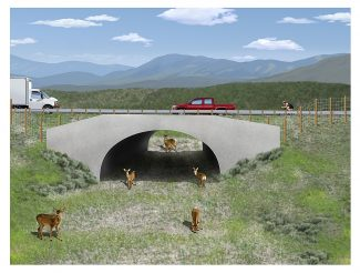 A rendering shows one of five under passes that are part of a $46 million improvement project planned for Highway 9 south of Kremmling. The underpasses and fencing are intended to help keep wildlife off the road, for the safety of the animals and drivers on the rural road.  Special to the Sky-Hi News/Citizens for a Safe Hwy. 9 Committee