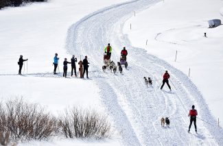 Sled dog and skijoring competitors take to the trails of Snow Mountain Ranch during Colorado Mountain Mushers races on Saturday, Jan. 11.