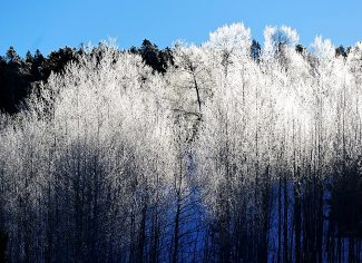Frosty trees are illuminated by the sun at Granby Ranch on Tuesday morning, Jan. 21, in Granby.