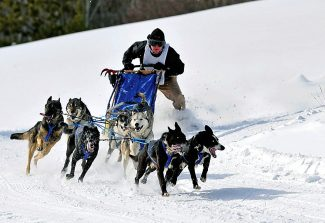 An eight-dog team navigates a turn during last year's Grand Dog Days of Winter Sled Dog Race at Grand Park in Fraser.  This year's event will take place on Saturday and Sunday.