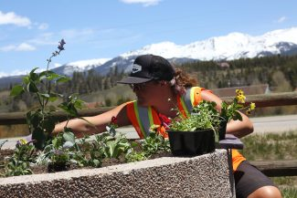 Fraser Town employee Katie Roman places new flowers in a pot located at the Fraser to Granby Trailhead on Thursday, June 2.