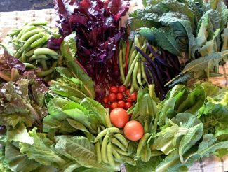 Last year's fresh vegetables, all grown in Grand County.