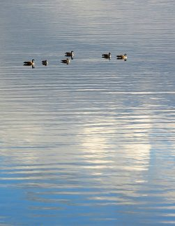 Canada geese enjoy a calm morning on Lake Granby on Wednesday, Sept. 19.  The forecast calls for more nice weather during the weekend with a chance of thunderstorms on Sunday afternoon.