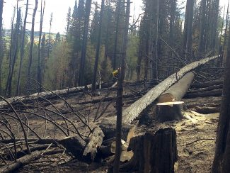 A firefighter works to clear downed tress and other debris from the Gore Ridge Fire burn scar over the weekend. The fire was sparked Tuesday afternoon Sept. 13 and was brought to full containment on Friday Sept. 16.