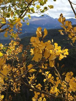 Glorious aspens frame a distant view of Long's Peak. Reader submitted photo by Julianne Eichler of Granby.