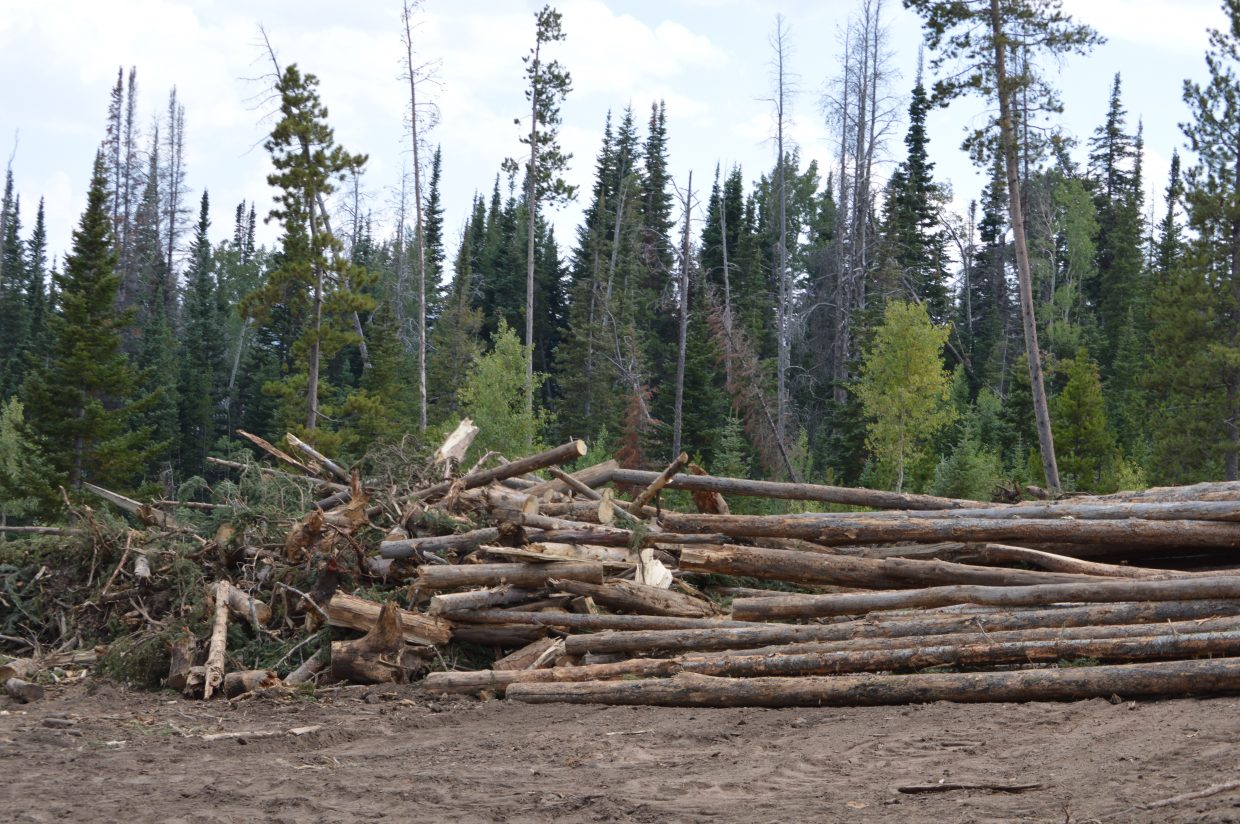 A pile of salvaged timber that will be loaded on to logging trucks to be sold or consumed.