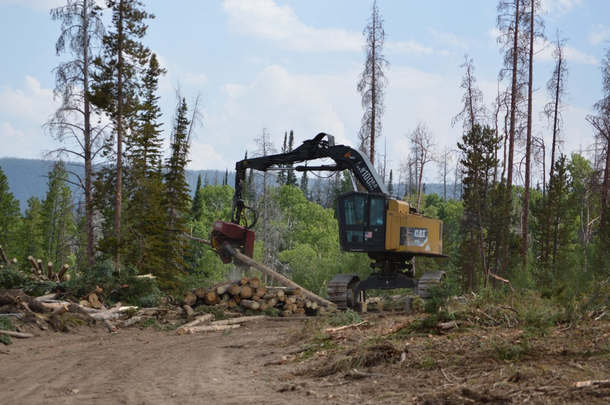 A processor removes branches off salvageable tree trunks and cuts the trunks to size.