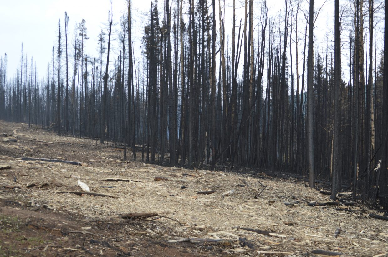 A burned area along Forest Road 100 that has had trees removed and stumps ground up by a masticator. Crews must remove any trees that could potentially fall on the road as a safety precaution.