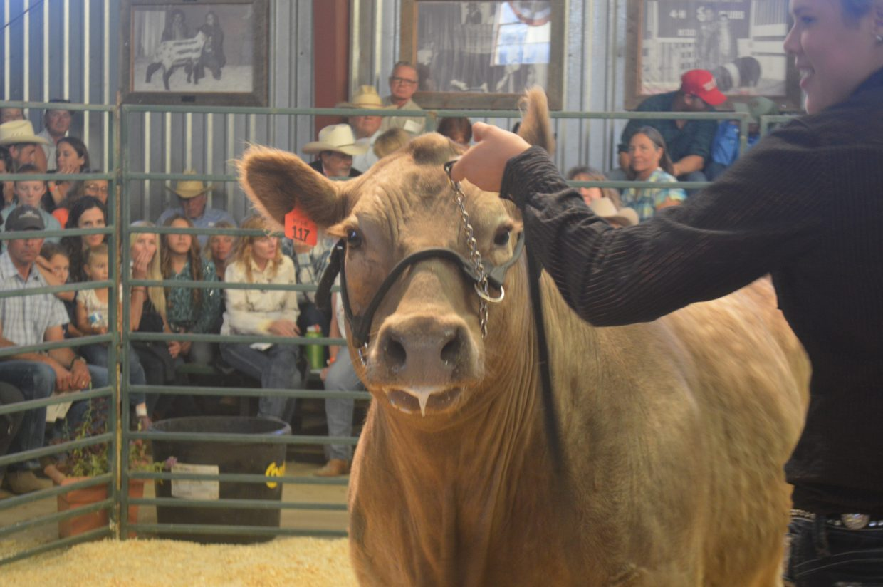 Sydney Ritschard, from Kremmling, raised steer and pigs for this year's fair and rodeo. Her steer sold for $7 per pound.
