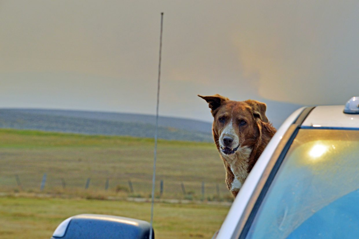 One of Rich Sherman's dogs with the smoke from the Silver Creek Fire ongoing in the background.