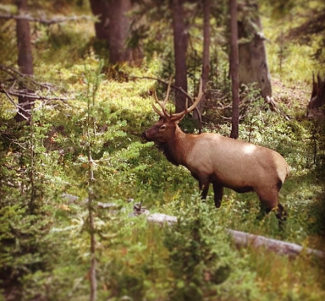 Hunters urged by CPW to study changes as applications for big game licenses open March 1