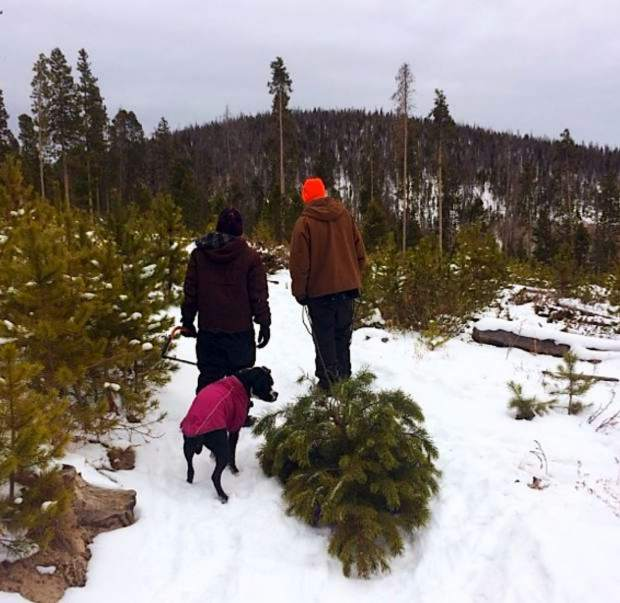 Disposing Of Christmas Trees: Season's Leavings: How To Dispose Of Your Christmas Tree