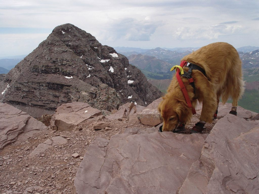Sawyer drinks from his bowl on the summit of North Maroon Peak. Maroon Peak is behind him with the traverse partially in view.