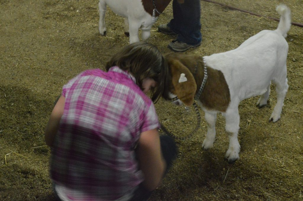 Livestock auction honors hard work from local 4-H | SkyHiNews com