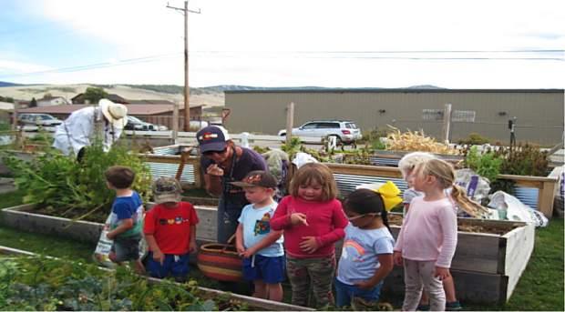 Granby preschoolers take a walking field trip to the Granby Community Gardens where they identified and harvested produce like carrots and strawberries.