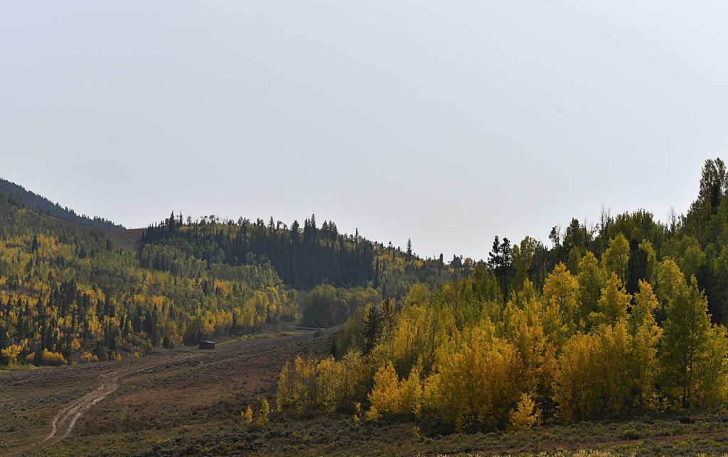 Fall colors are mostly yellow this year, but some parts of the county feature auburn and red trees as well.